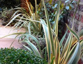 Courtyard Garden Design Kensington